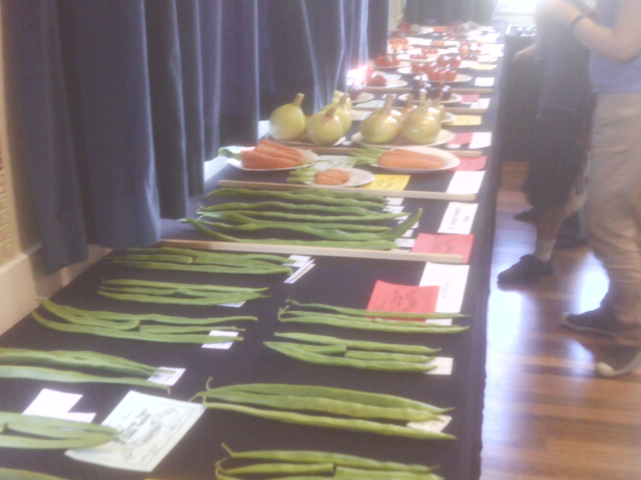 Beans and onions  at Willersey Horticultural Show