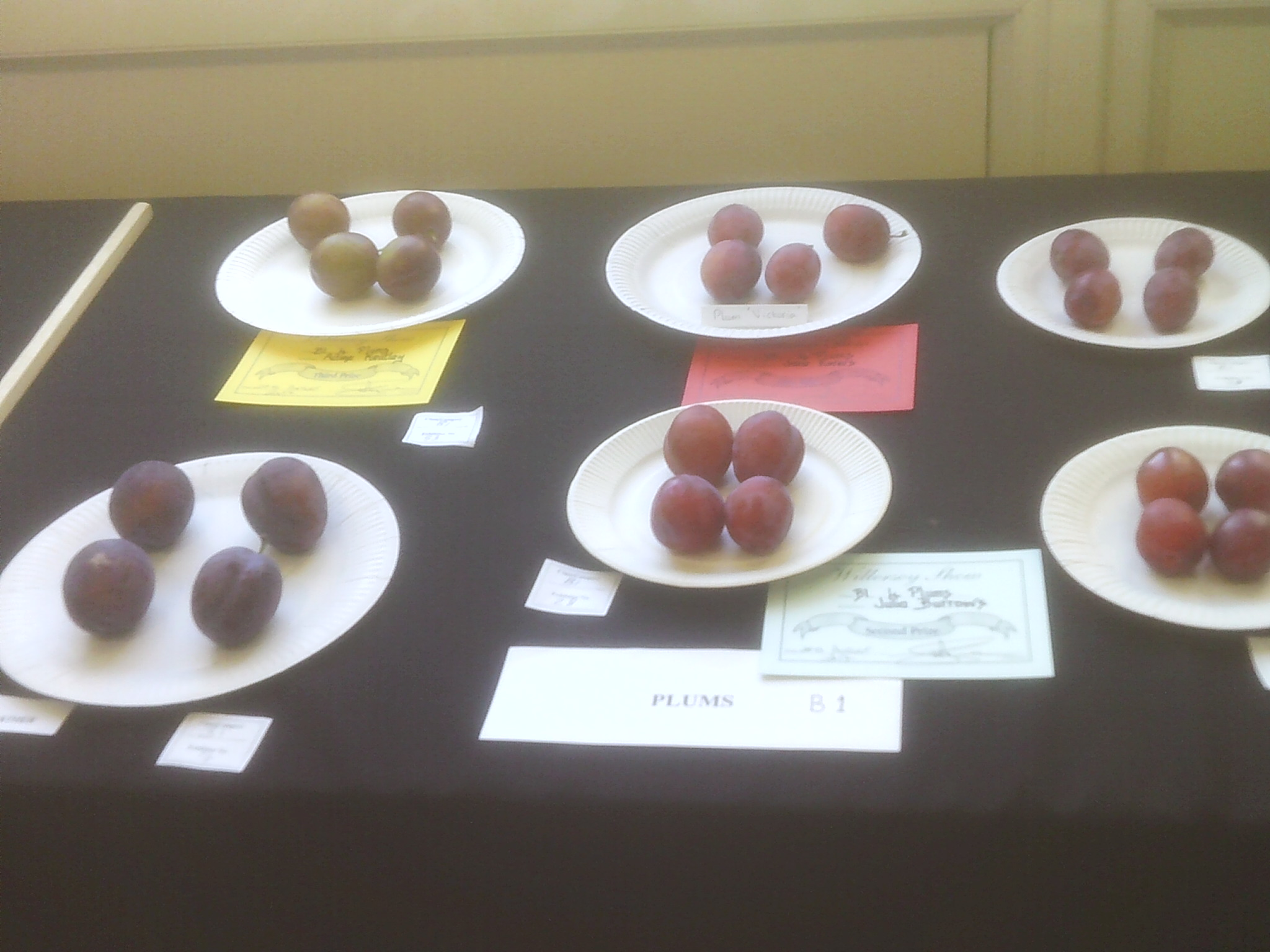 Plums at Willersey Horticultural Show
